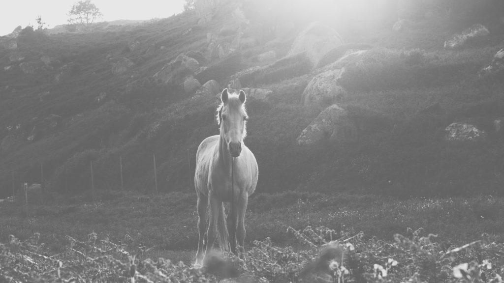 Systemische Betrachtung für Pferdebesitzer in Kirchberg / Crailsheim